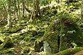 Mossy Rocks in Wakasugi Primeval Forest 01.jpg