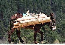 Seppure insolito nel mondo occidentale, l'uso di asini per il trasporto di legna in montagna non è completamente scomparso: qui un esempio in Bulgaria, nel 2007.