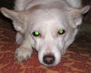 My mixed-breed dog