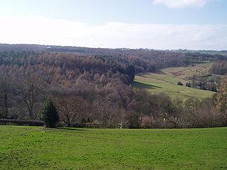 Myers Wood