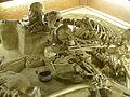 NHM - Stillfried Skelette.jpg