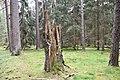 NSG Niederrodener Lache02.jpg