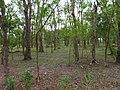 Nanao Native Trees Park 南澳原生樹木園區 - panoramio.jpg