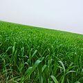 Natural Crops.jpg