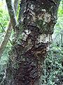 Nature of Langkawi (7).JPG