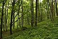 Nature reserve Žižkův vrch in summer 2012 (5).JPG