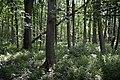 Naturschutzgebiet Haseder Busch - Im Haseder Busch (2).jpg