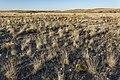 Near Border Hill - Flickr - aspidoscelis (4).jpg