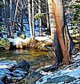New Sun on New Snow, Tuolumne River, Yosemite 5-15 (26031594355).jpg