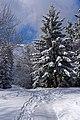 Niebieski szlak turystyczny na Luboń Wielki, 20210306 1050 2963.jpg