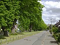 Niedersachsen, Goslar, Sieben Linden, ND-GS 38, Linden am Rosenberge.jpg