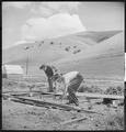 Niles, California. Miscellaneous. Migrant youth ripping up the boards of an old tent platform in a contractor's camp.... - NARA - 532136.tif