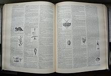Dictionary - Wikipedia