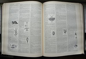 Dictionary - The French-language Petit Larousse is an example of an illustrated dictionary.