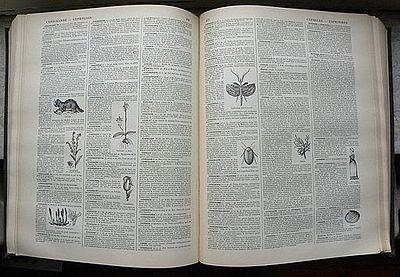 Mise En Page Wikipédia