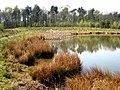Oakenshaw Wildlife Reserve - geograph.org.uk - 401646.jpg