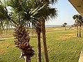 Oceanside Inn, Jekyll Island, GA - panoramio (1).jpg