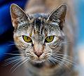 Olhos de um gato-2.jpg