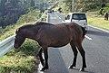 Ono, Kushima, Miyazaki Prefecture 888-0221, Japan - panoramio (3).jpg