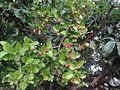 Orange berry.jpg