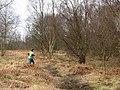 Orienteering, Calder Wood - geograph.org.uk - 325153.jpg