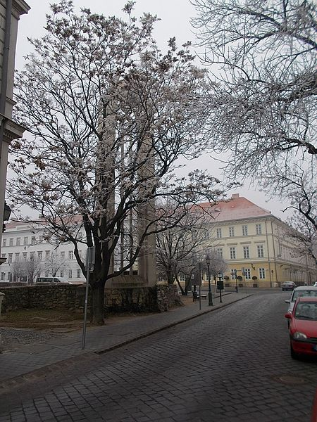 File:Orszaghaz Street, Kapisztran Square, 2017 Varnegyed.jpg