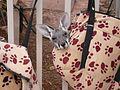 Outback Trip - Coober Pedy Kangaroo Sanctuary 7 (4157718532).jpg