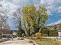 Pörtschach Johannes-Brahms-Promenade Blumenstrand Stieleichen 11042020 8705.jpg