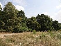 Přírodní park Škvorecká obora-Králičina - lesy východně od sídliště Rohožník a severně od Květnické studánky (11).JPG