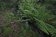 Přírodní rezervace Skalské rašeliniště (07).jpg
