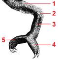 PSM V06 D545 Chameleon leg tagged.png