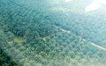 Palm trees near Kuala Lumpur (3363661758).jpg