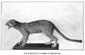Panther BSNH Bulletin1916.png