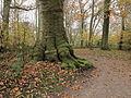 Park Heremastate. Herfstsfeer.JPG