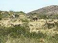 Parque Nacional Lihue Calel, La Pampa, Argentina . - panoramio (4).jpg