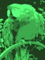 Parrot amscpc green palette.png