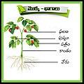 Parts of Plant.jpg
