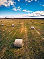 Patagonia hayfield (28448902849).jpg