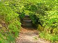Path in Hebden Wood (2505523751).jpg