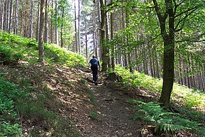 Peaslake - A typical path through the managed woodland, Hurtwood, narrower than the Greensand Way path through it