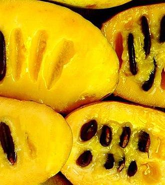 Asimina triloba - Fruit