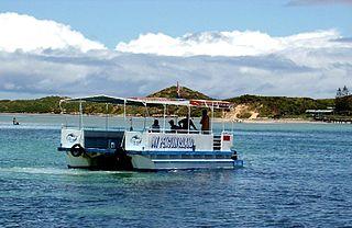 Penguin Island (Western Australia) A tidal island near Perth, Western Australia