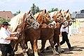 Pferdesportveranstaltung in Seifersdorf (Jahnsdorf)..2H1A8655WI.jpg