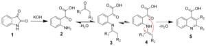 Pfitzinger reaction - The mechanism of the Pfitzinger reaction
