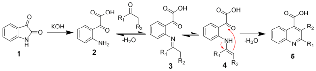 The mechanism of the Pfitzinger reaction