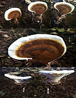 Photo montage Fungi.jpg