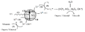Photocatalytic mineralisation.png
