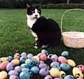 Photograph of Socks the Cat Posing Next to Easter Eggs Decorated with Paw Prints- 04-01-1994 (6461516025) (cropped).jpg