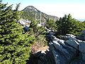 Picea rubens Grandfather Mountain.jpg