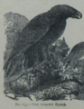 Picture Natural History - No 133 - The Golden Eagle.png